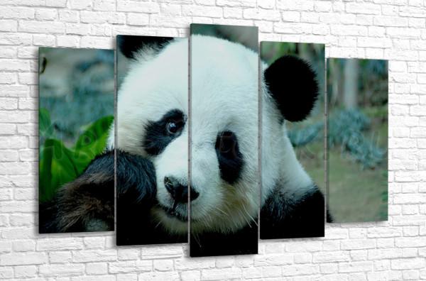 Панда за обедом