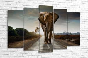 Слон, идущий по дороге