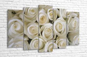 На фоне белых роз