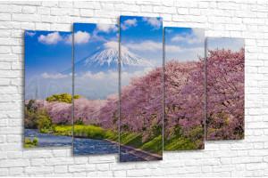 Расцвет сакуры